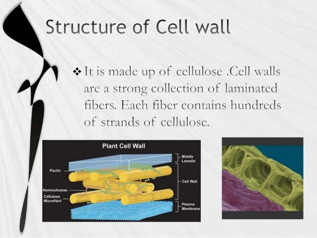 Structure and functions of different cell organelles of cell Slide 3