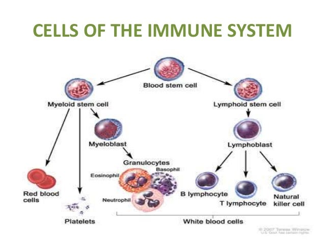 structure and functions of immune system, Human Body