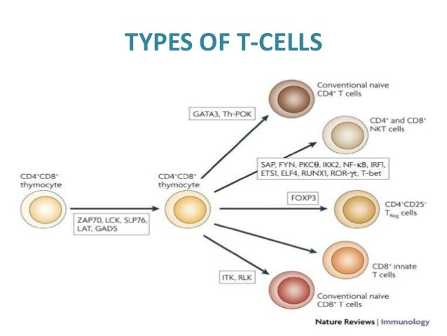 Structure and functions of immune system