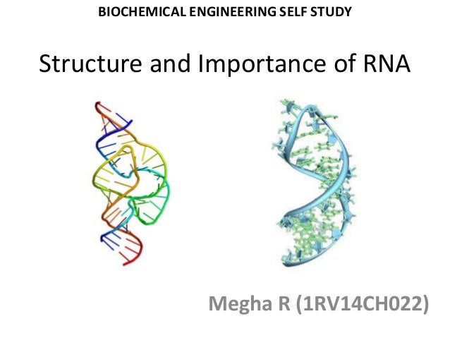 Structure And Importance Of Rna
