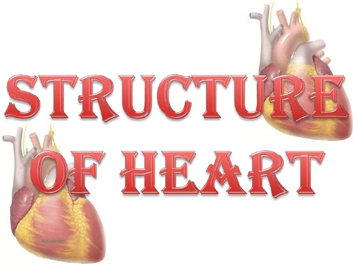 Structure of heart<br />
