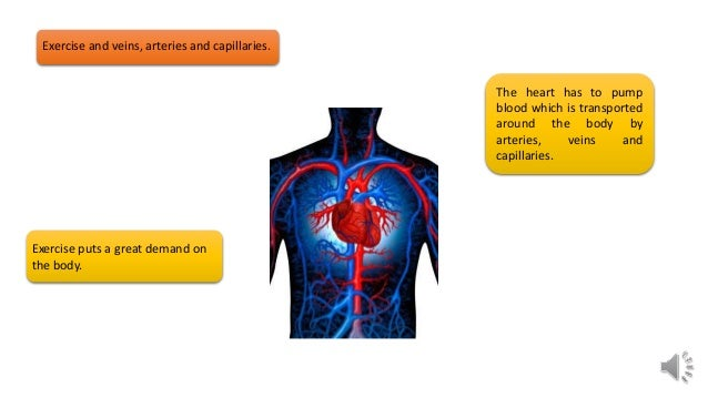 Gcse pe revision structure of arteries capillaries and veins 6 exercise and veins arteries and capillaries ccuart Choice Image