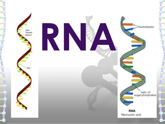 structure of dna and rna