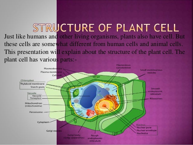 Structure of plant cell just like humans and other living organisms plants also have cell ccuart Image collections