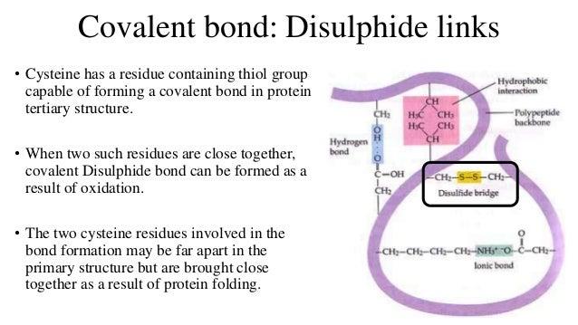 Disulfide bridge structure