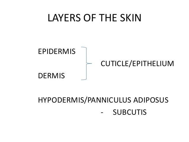 structure of skin by aseem, Human Body