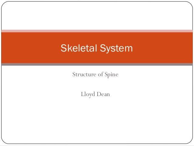 Structure of Spine Lloyd Dean Skeletal System