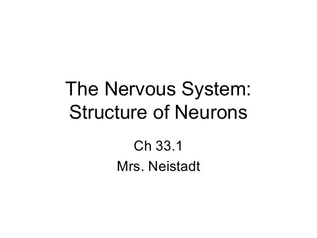 The Nervous System:Structure of Neurons       Ch 33.1     Mrs. Neistadt