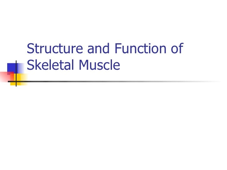 Structure and Function ofSkeletal Muscle