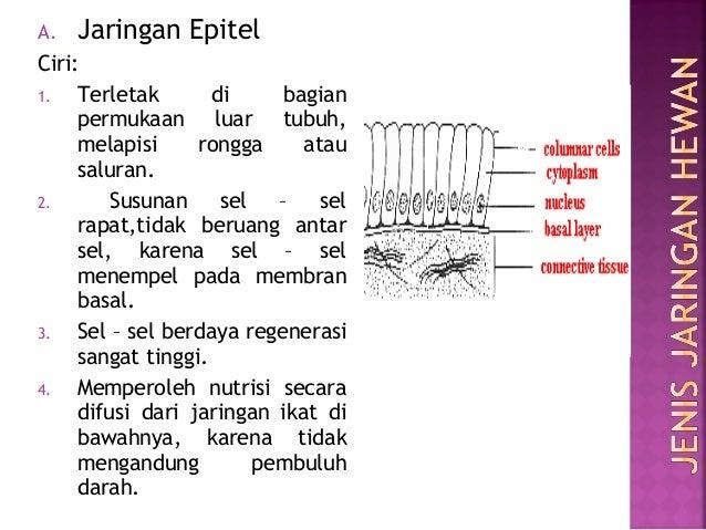 Struktur Dan Fungsi Jaringan Hewan