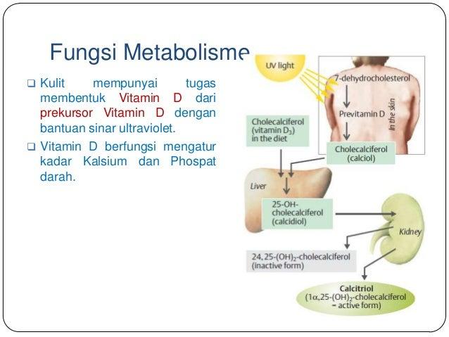Fungsi Metabolisme Hati