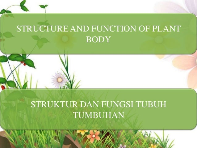 STRUCTURE AND FUNCTION OF PLANT            BODY  STRUKTUR DAN FUNGSI TUBUH         TUMBUHAN