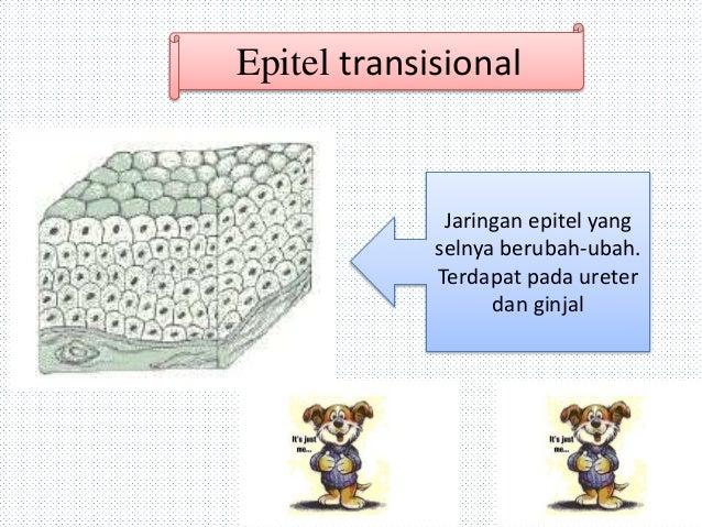 Struktur Dan Jaringan Hewan