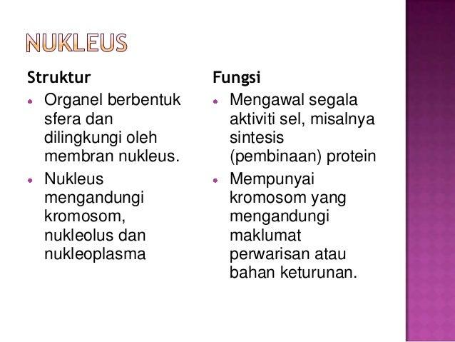 √ Pengertian Metabolisme, Jenis, Proses, dan Fungsi Terlengkap