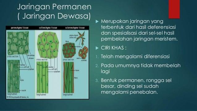 Struktur Jaringan Tumbuhan Kelompok 2