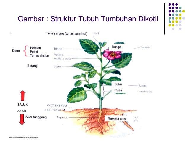 Struktur Tumbuhan Slide 2