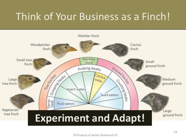 Think of Your Business as a Finch!    Experiment and Adapt!                                                19            ©...