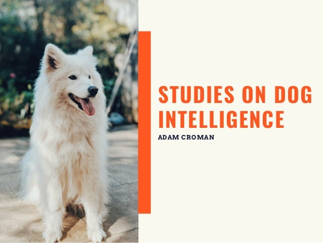 STUDIES ON DOG INTELLIGENCE ADAM CROMAN
