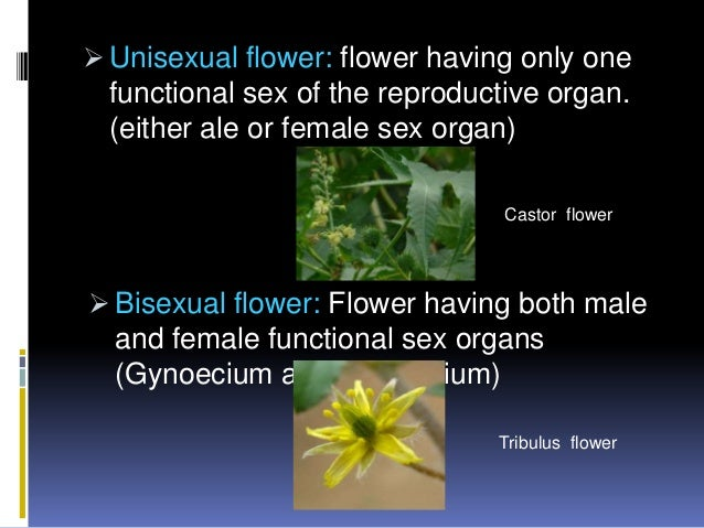 Pictures of unisexual plants
