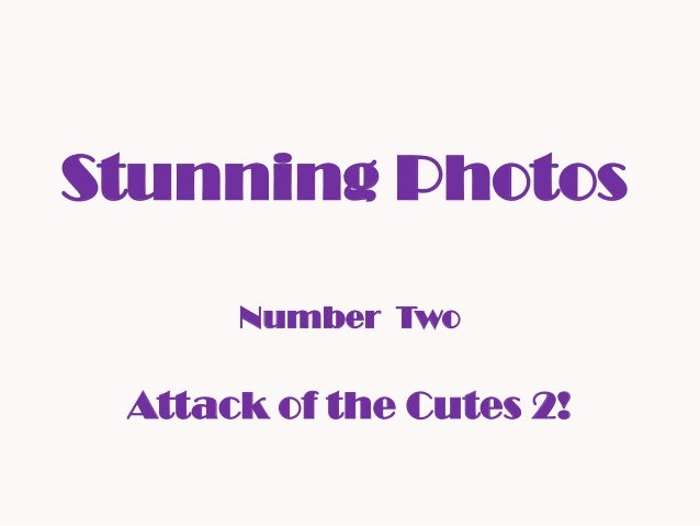 Stunning Photos Number Two Attack of the Cutes 2!