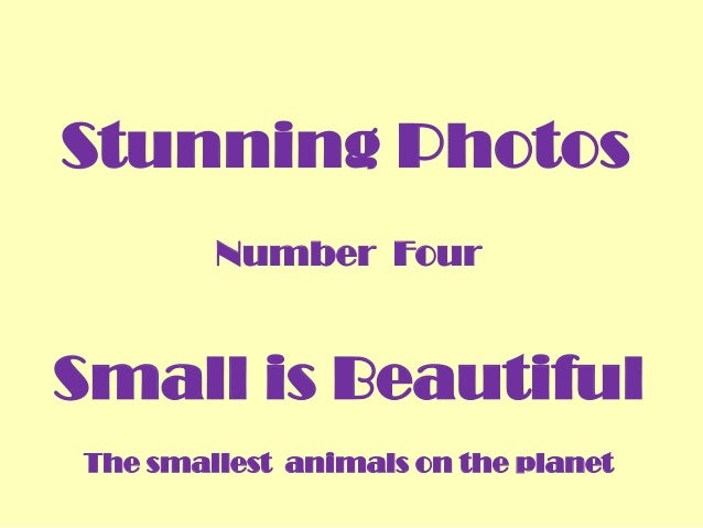 Stunning Photos Number Four  Small is Beautiful The smallest animals on the planet