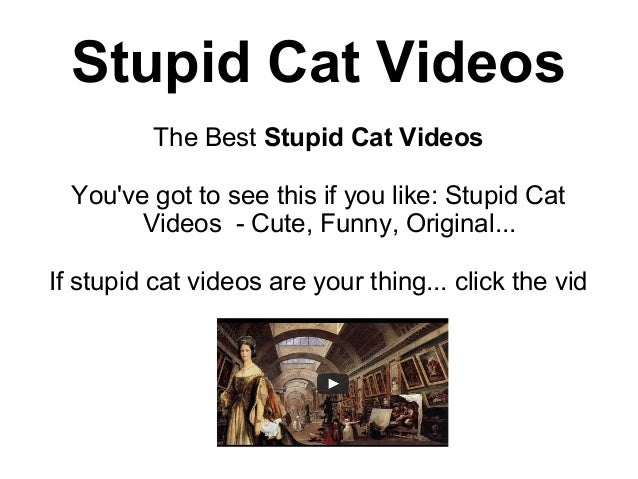 Stupid Cat Videos          The Best Stupid Cat Videos  Youve got to see this if you like: Stupid Cat        Videos - Cute,...