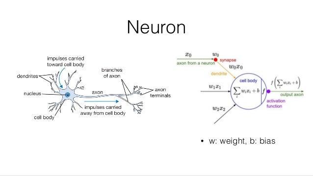 Neuron • w: weight, b: bias