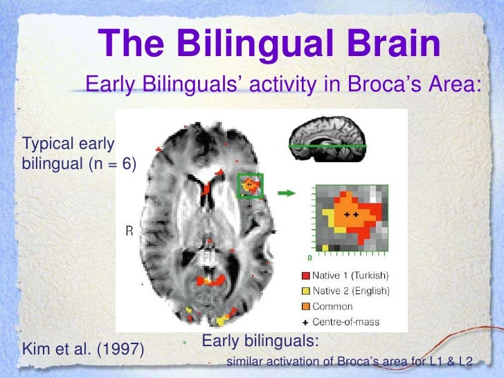 language processing of bilinguals 22092009 and who have learned / acquired english as an l2 later in life also, we will compare the participants who learned english mostly in contexts where the l1.