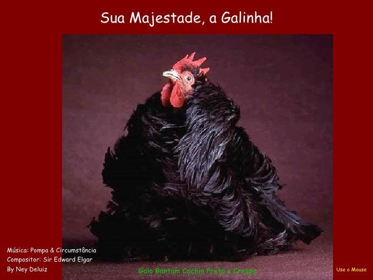 Sua Majestade, a Galinha!Música: Pompa & CircumstânciaCompositor: Sir Edward ElgarBy Ney Deluiz                        Gal...