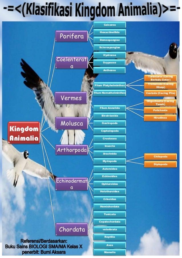 Image of: Peta Konsep Slideshare Klasifikasi Kingdom Animalia