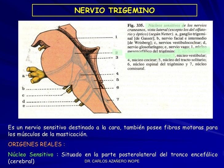 Nervio Trigemino Slide 2