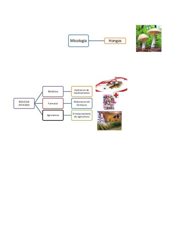 Subdivision De Las Ciencias Biologicas