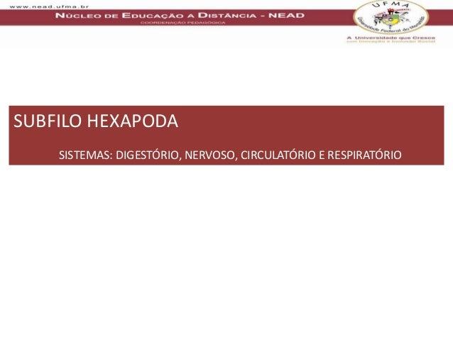 SUBFILO HEXAPODA    SISTEMAS: DIGESTÓRIO, NERVOSO, CIRCULATÓRIO E RESPIRATÓRIO