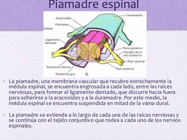 Hemorragia subdural • La hemorragia subdural es el resultado de un desgarro de las venas cerebrales superiores en su punto...