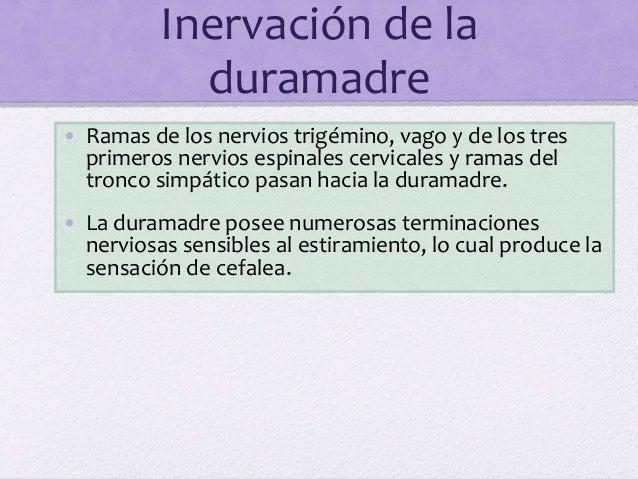 Inervación de la duramadre • Ramas de los nervios trigémino, vago y de los tres primeros nervios espinales cervicales y ra...
