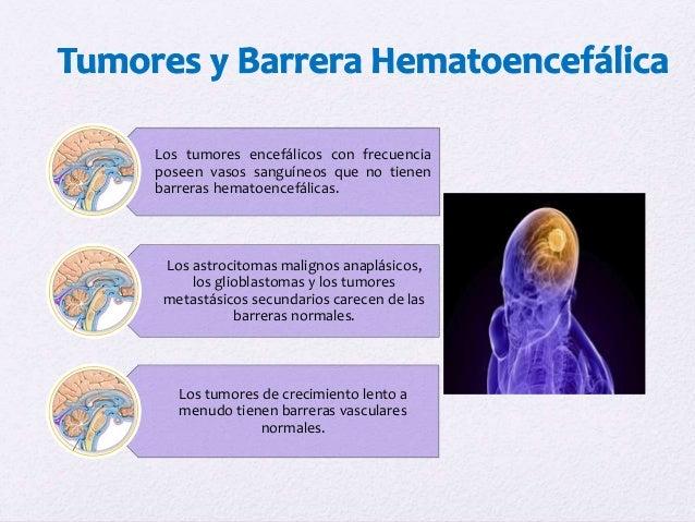 Meninges cerebroespinales y sistema ventricular