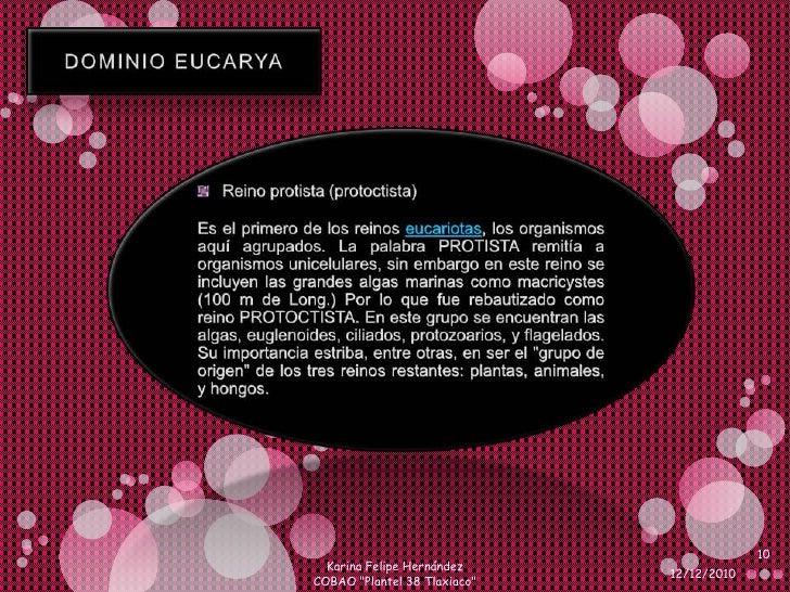 DOMINIO EUCARYA<br />Reino protista (protoctista)<br />Es el primero de los reinos eucariotas, los organismos aquí agrupad...