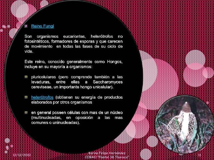 Reino Fungí<br />Son organismos eucariontes, heterótrofos no fotosintéticos, formadores de esporas y que carecen de movimi...
