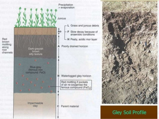 Chemistry and physics of submerged soil for Minerals present in soil