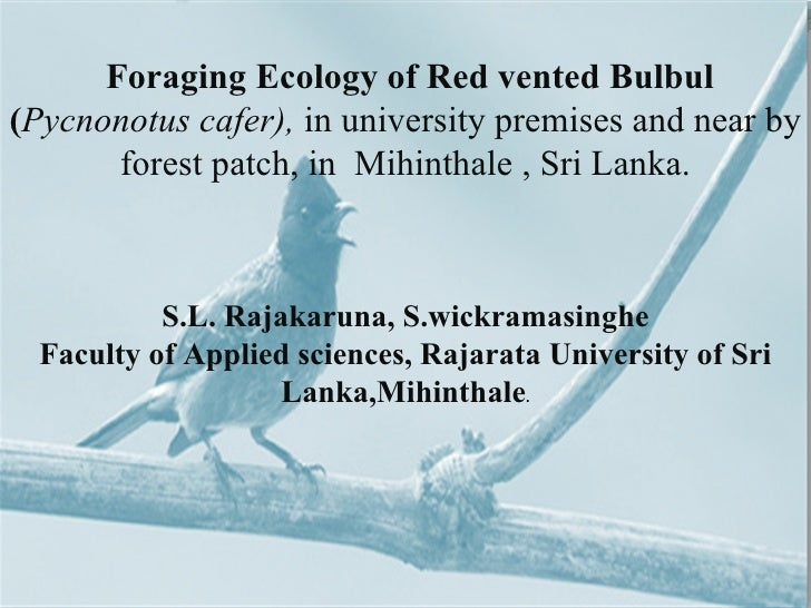 HABITAT Y               THROUGH AN      Foraging Ecology of Red vented Bulbul               INDICATOR(Pycnonotus cafer), i...