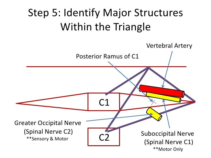 CHAPTER 17 PERIPHERAL NERVE INJURIES  Chiro