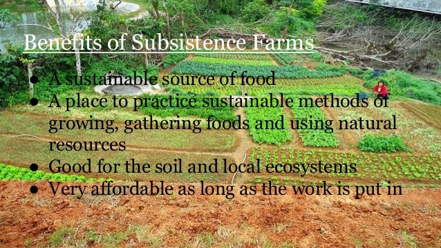 Subsistence Agriculture Essay