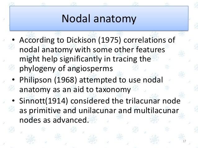Fine Nodal Anatomy Of Angiosperm Festooning - Anatomy And Physiology ...
