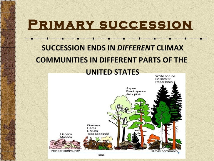 Succession 10 primary succession succession ends in different climax publicscrutiny Images