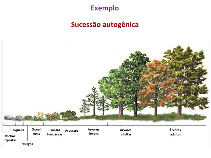Sucessao Ecologica 4272898 on Insect Worksheet
