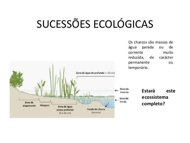 SUCESSÕES ECOLÓGICAS<br />Os charcos são massas de água parada ou de corrente muito reduzida, de carácter permanente ou te...