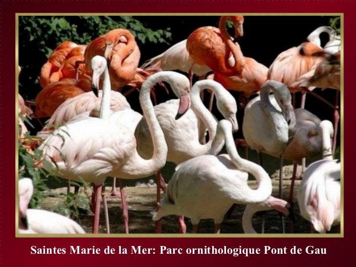 Saintes Marie de la Mer: Parc ornithologique Pont de Gau