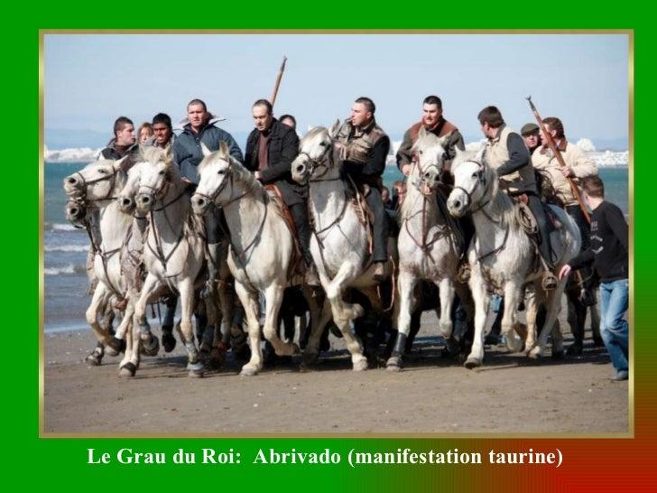 Le Grau du Roi:  Abrivado (manifestation taurine)