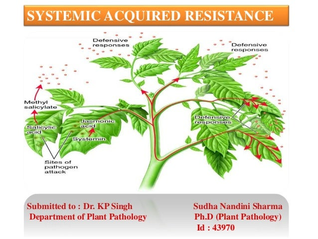 Systemic Acquired Resistance Ppt
