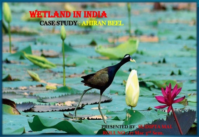 WETLAND IN INDIA CASE STUDY : AHIRAN BEEL PRESENTED BY : SUDIPTA MAL ROLL NO : 17 Msc 3rd Sem.